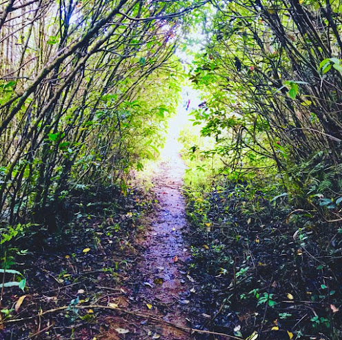 Chariot Path