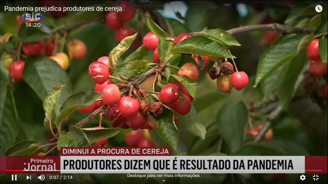 Vídeo - Pandemia prejudica produtores de cereja