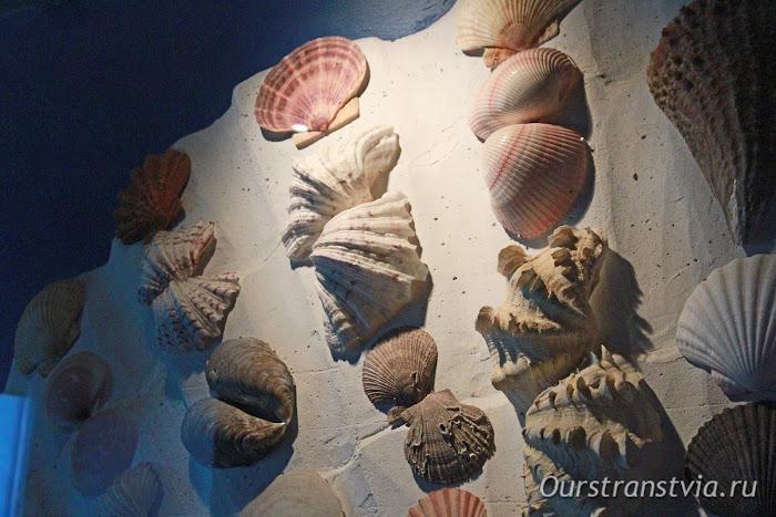 Аквариум в Музее Мирового океана