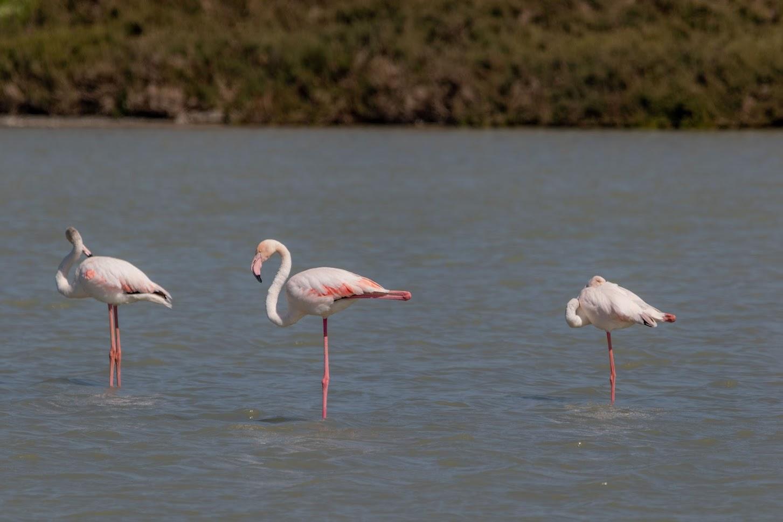 Фламинго и другие птицы.
