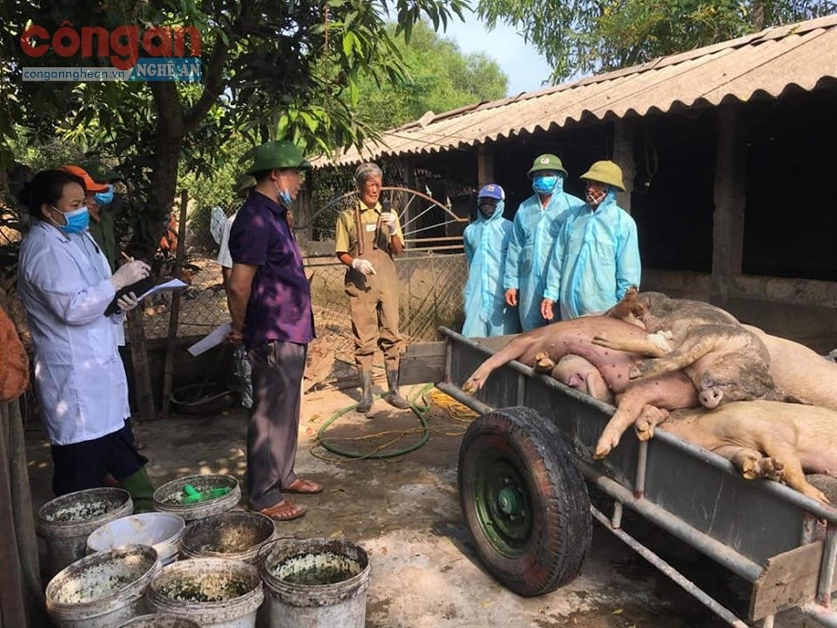 Cần tổ chức tiêu hủy lợn bệnh đúng quy trình, tuyệt đối không để người chăn nuôi tự tiêu hủy