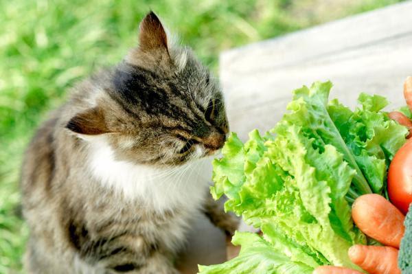 alimentos prebióticos foto gato comiendo lechuga