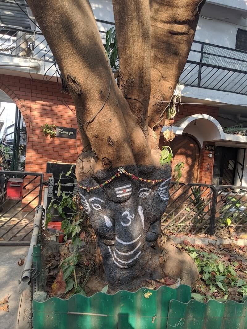 bangalore tree.jpeg
