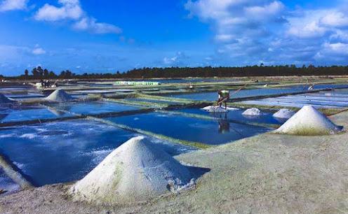 Lanka Salt Ltd