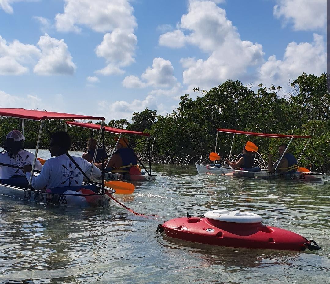 Clear Bottom Mangrove Tour