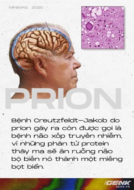 Những cái chết thầm lặng vì nhiễm prion: Phân tử thây ma âm thầm biến não bộ thành bọt biển - Ảnh 5.