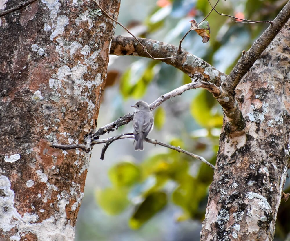 bird chirping on br hills.jpg