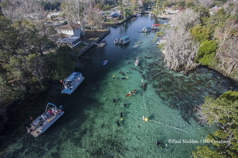 Crystal River, o refúgio dos peixes-boi