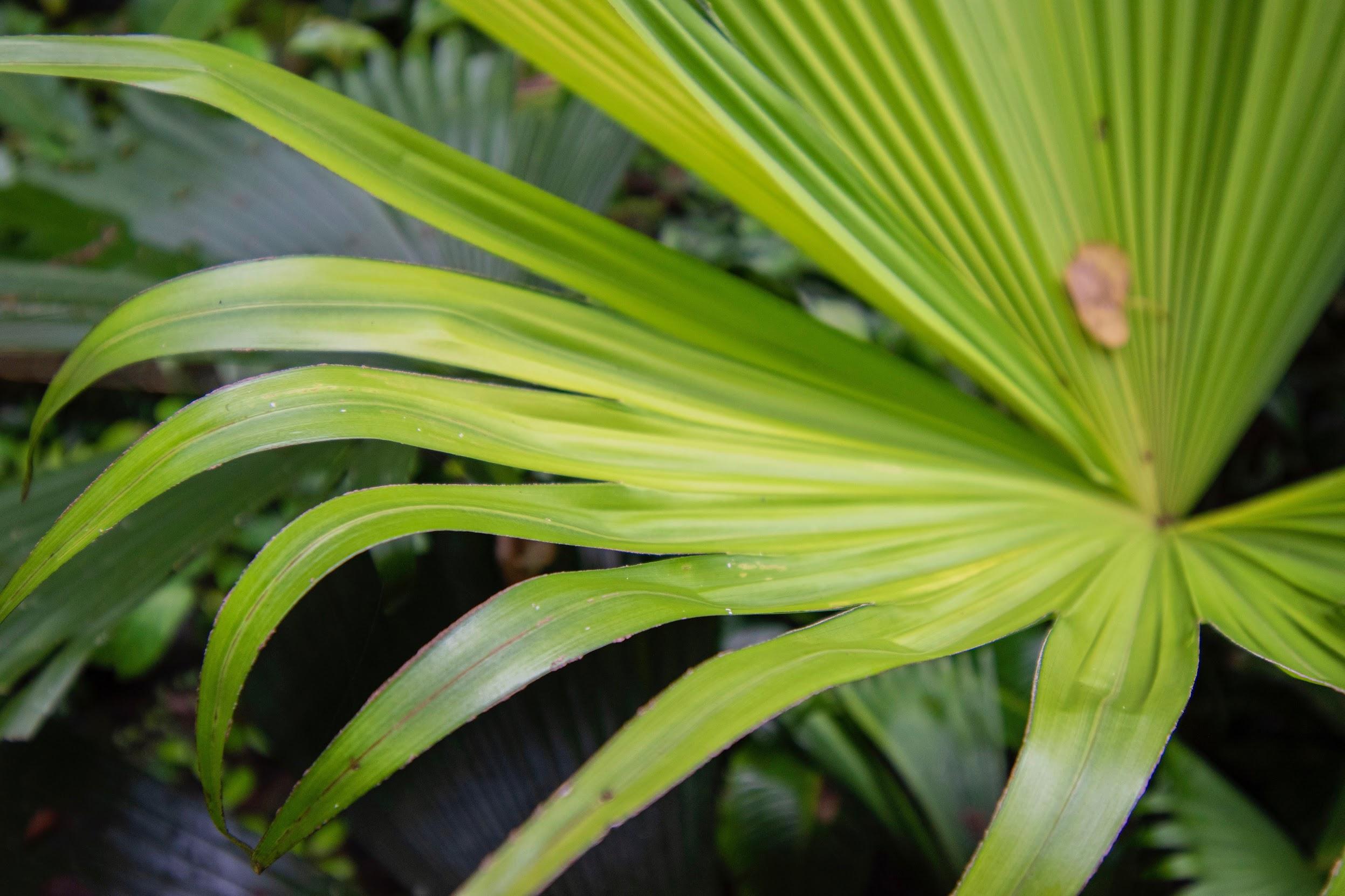 Monteverde-tips