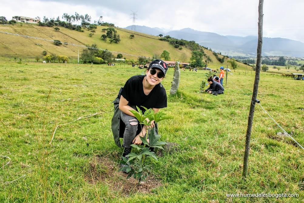 Siembras de árboles Colombia