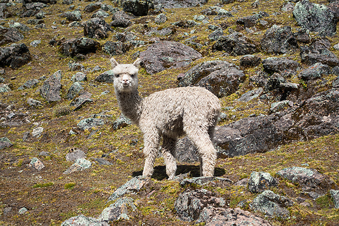 lacuri, munte, Peru