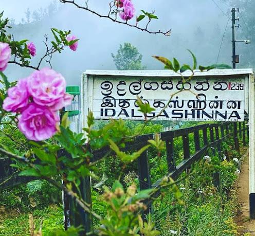 Idalgashinna