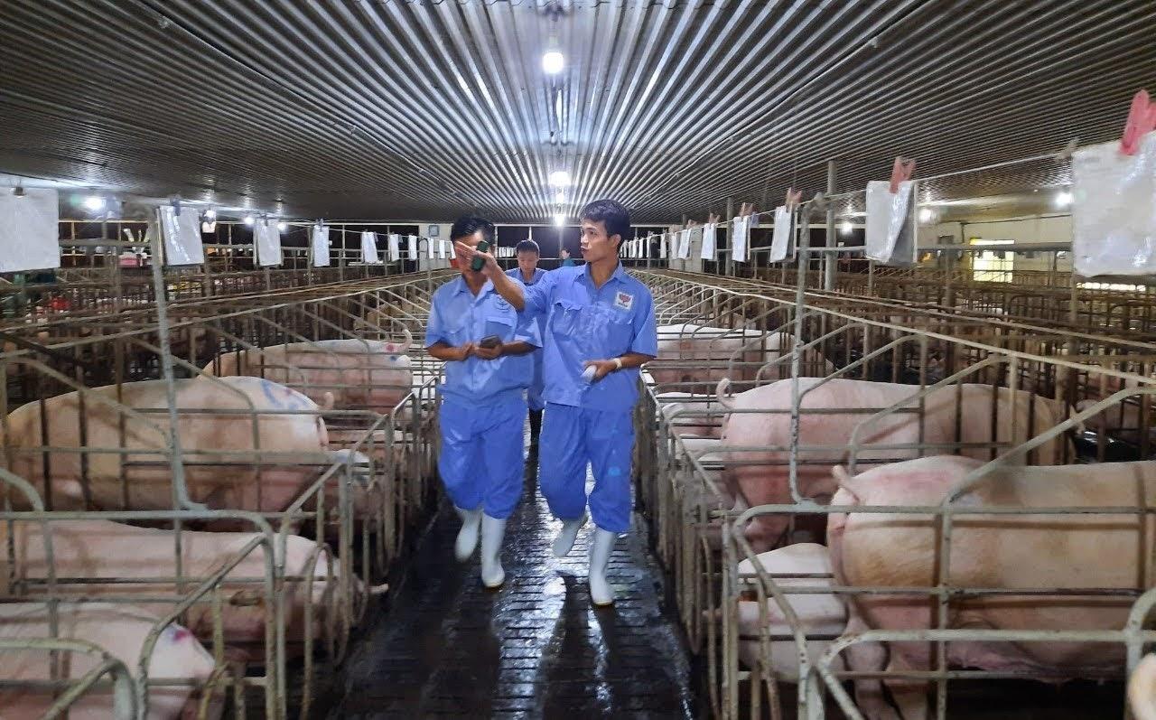 Đoàn công tác của Chi cục Chăn nuôi và Thú y tỉnh Nghệ An kiểm tra, lấy mẫu kiểm tra tại trang trại của Công ty TNHH Đại Thành Lộc