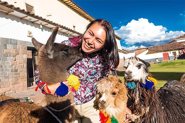 alpaca, Cusco, Peru