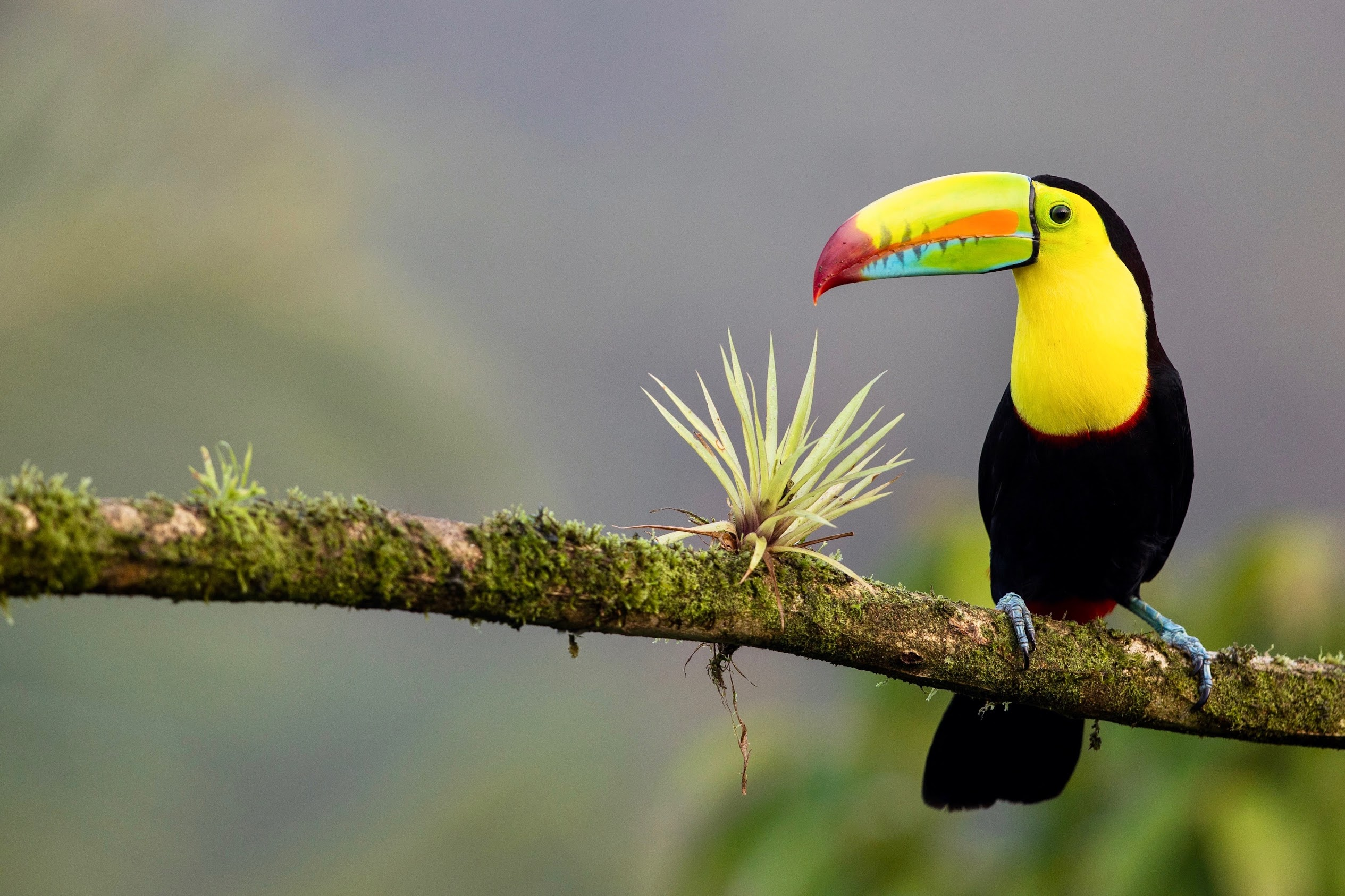 flora-fauna-costa-rica