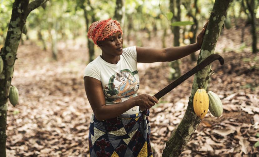 Pestovateľka kakaa Dah Oho z družstva ECAKOOG. Foto: (Fairtrade, Christoph Köstlin.)
