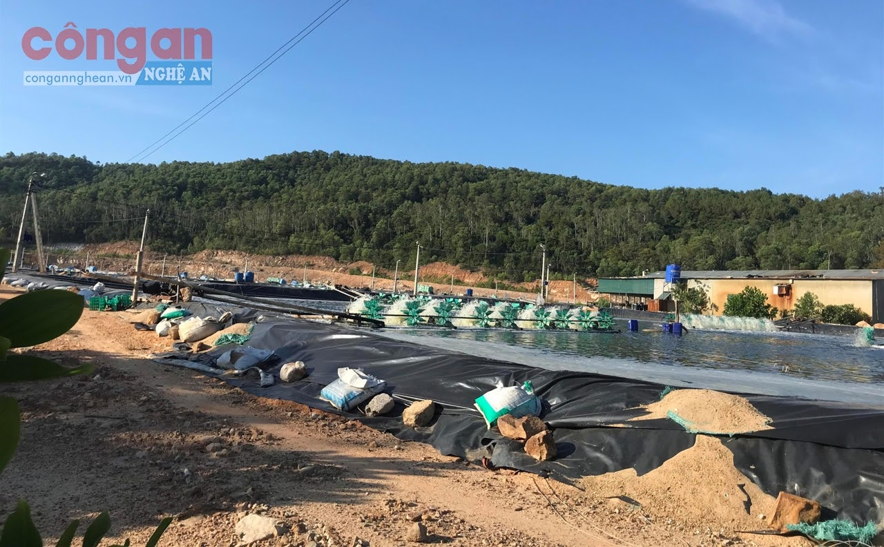 Trang trại nuôi tôm có diện tích hơn 2,5 ha với 16 hồ nuôi tôm  nhưng không có đánh giá tác động môi trường