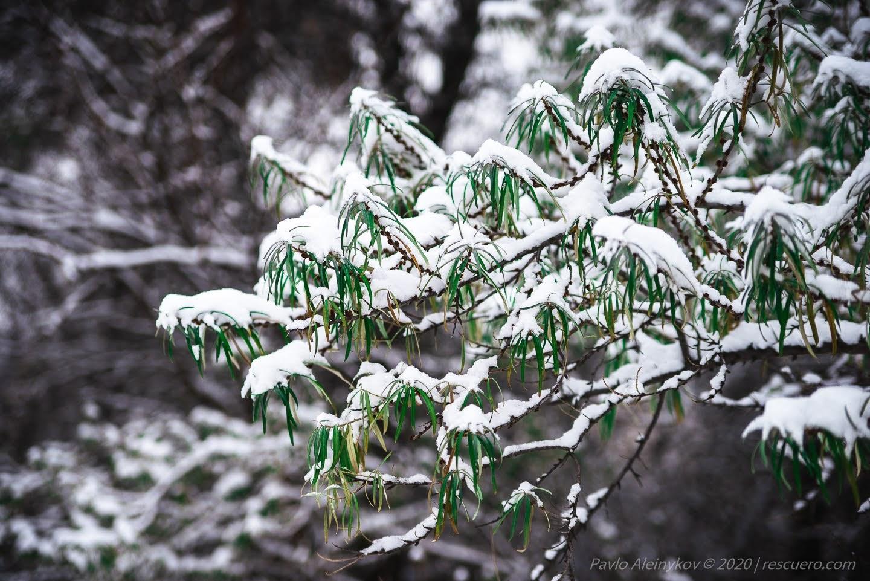 Сніг і листя
