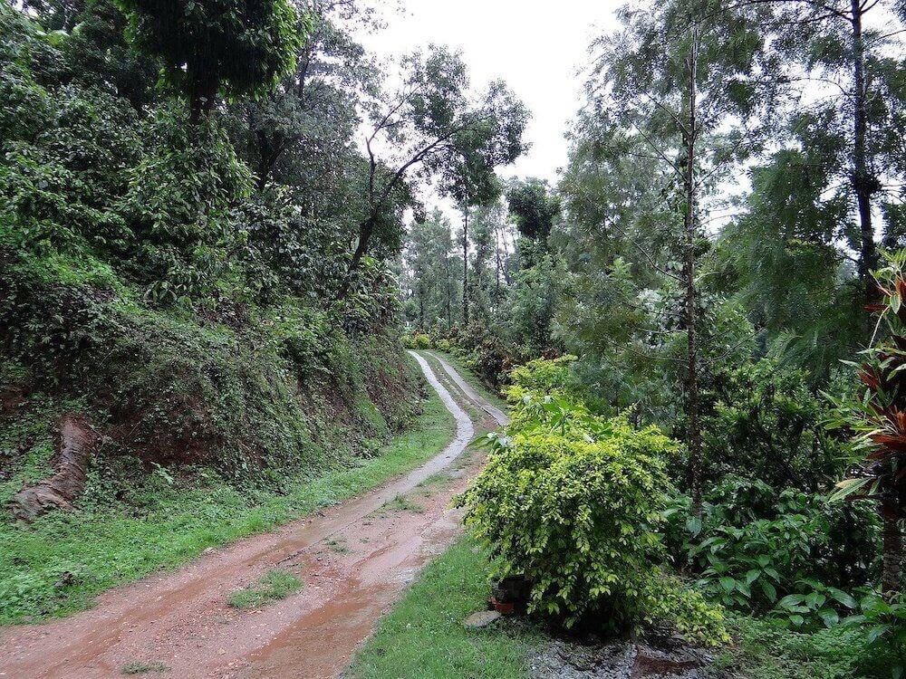 walking trail in a coffee estate in coorg madikeri 1.jpg