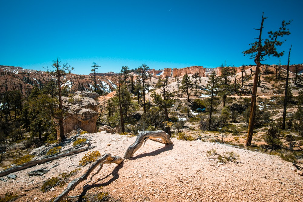 Bryce Canyon Tower bridge in the distance