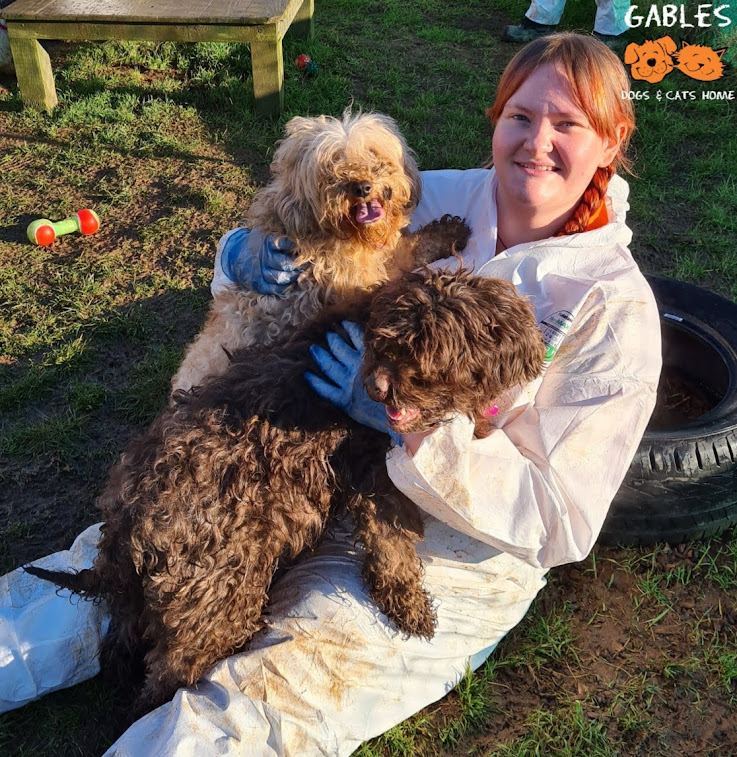 Two dogs with staff member