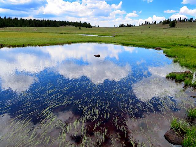 Donkey Meadows pond