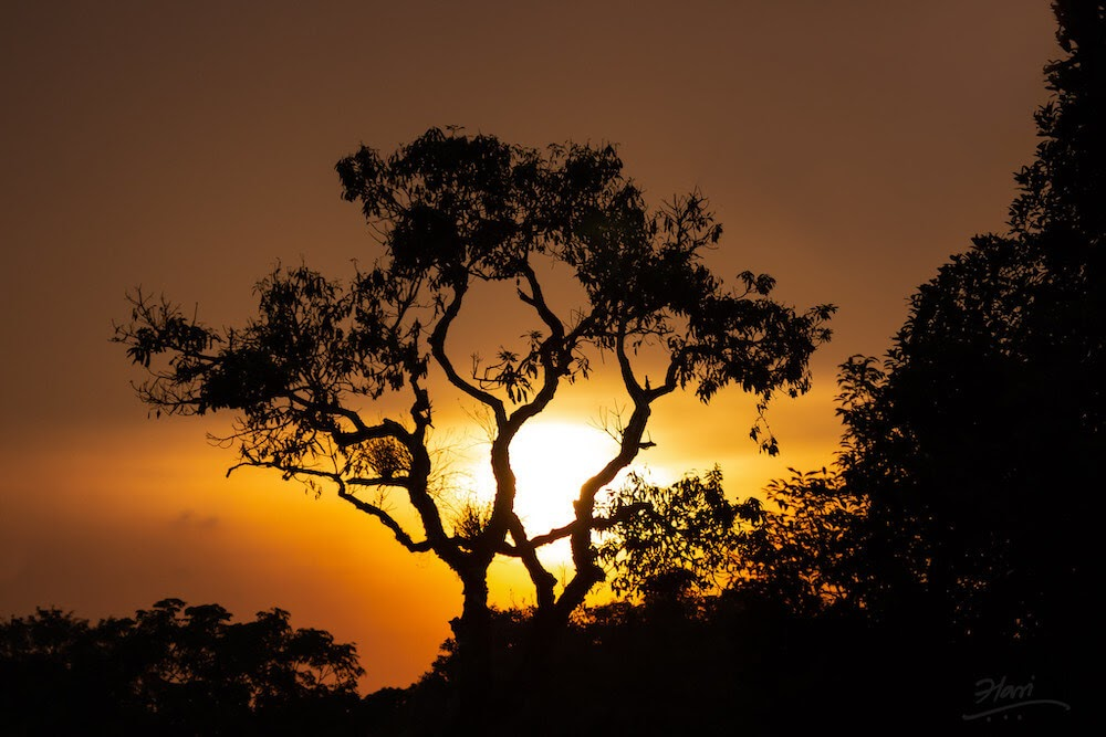 fiery sunset in coorg used in article for hotels in madikeri coorg.jpg