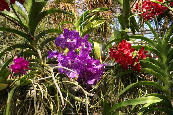 Linz Botanical Gardens