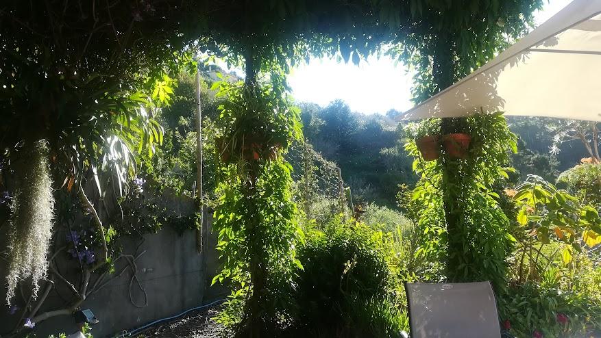 het zijterras van ons huis op Madeira met de wilde wingerd die volop schaduw geeft.