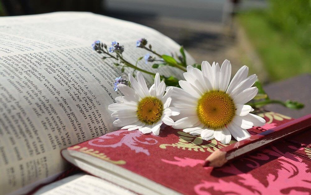 daisies on a book.jpg