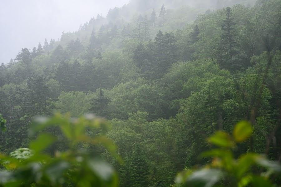 完全に雨の夏山登山:穂高岳山荘へ1泊2日のテント泊経て感じたことをメモ