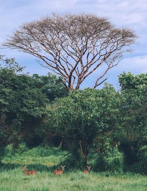 Wasgamuwa National Park