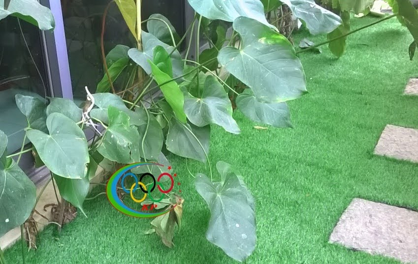 Sao để tìm mua sản phẩm Thảm cỏ nhựa sân vườn giá trị tốt