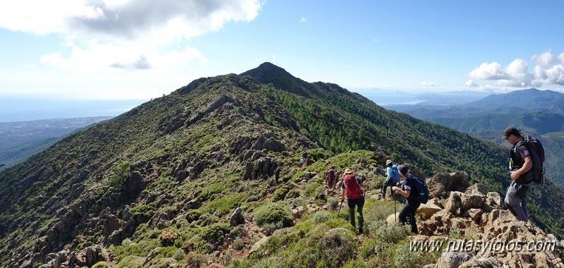 Sierra Palmitera
