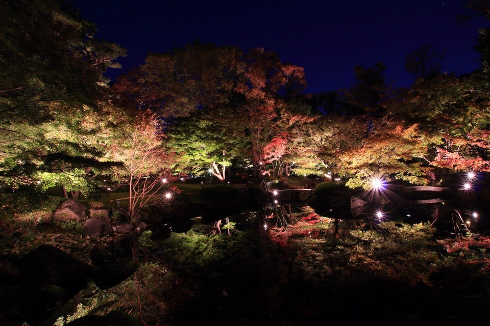 大田黒公園で紅葉のライトアップを撮ってきた!