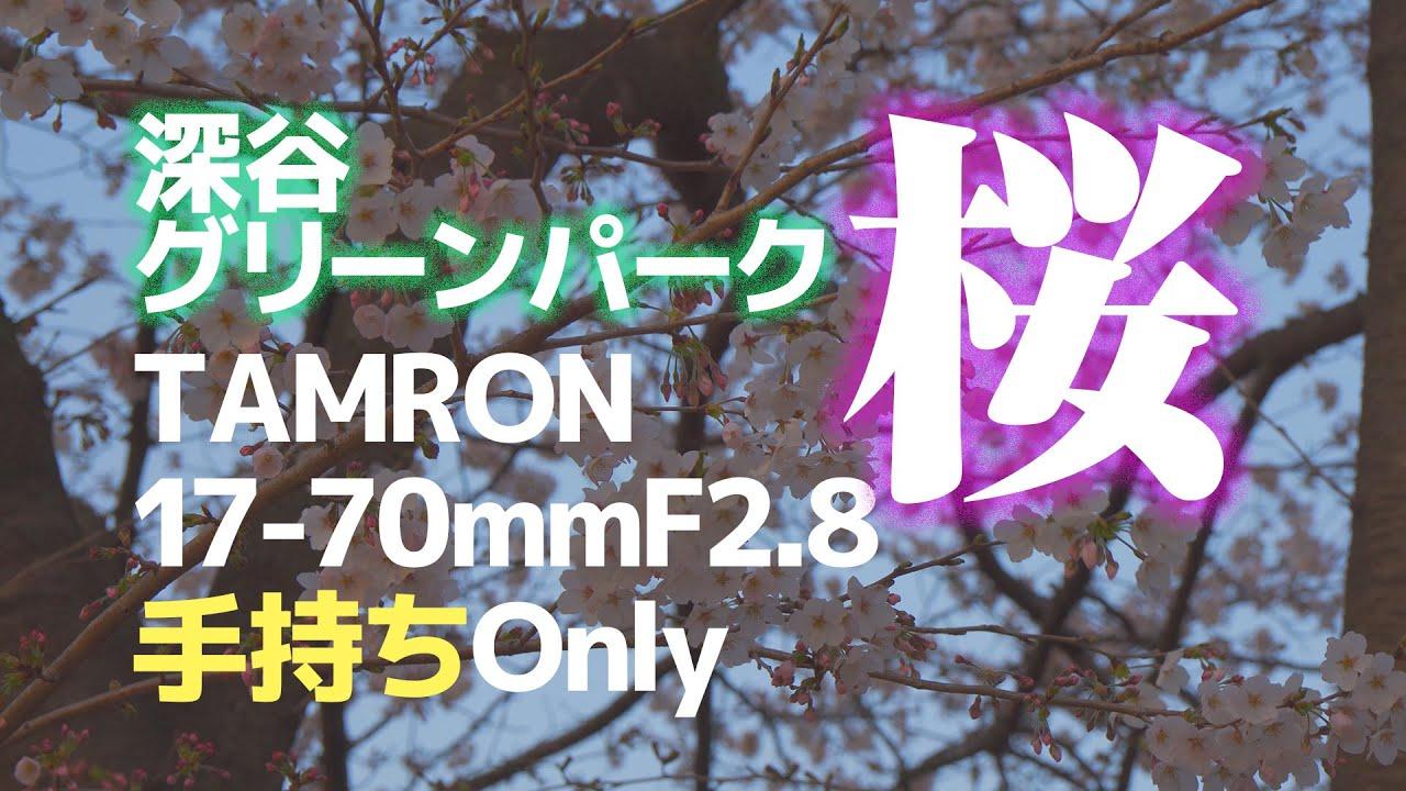【桜】深谷グリーンパーク【TAMRON 17-70mm F2.8】手持ちOnly