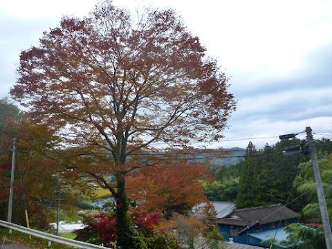 ひころの里秋まつり2012 写真9