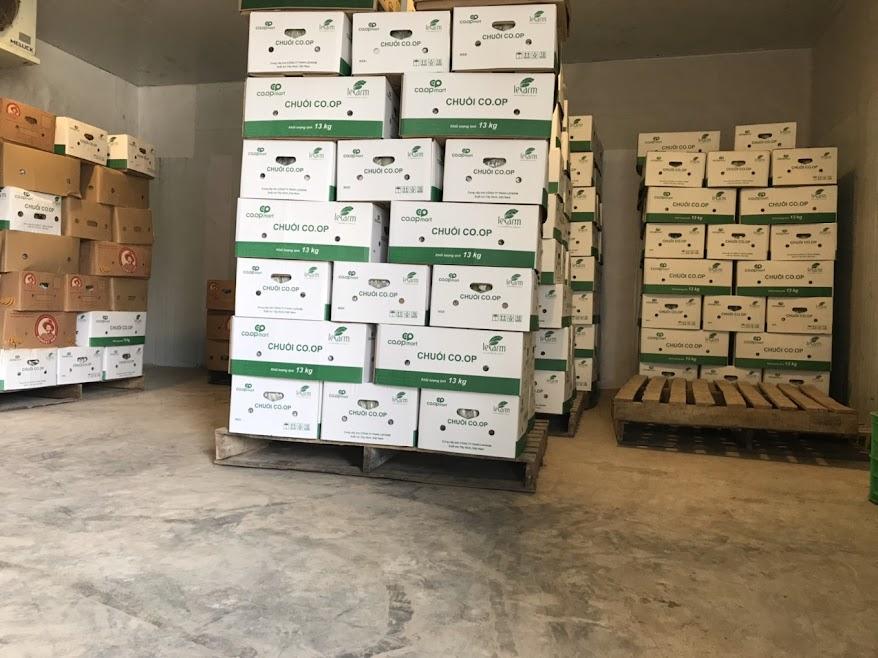 Hệ thống kho mát bảo quản trái chuối