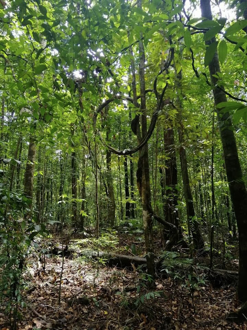 Kanneliya Rainforest