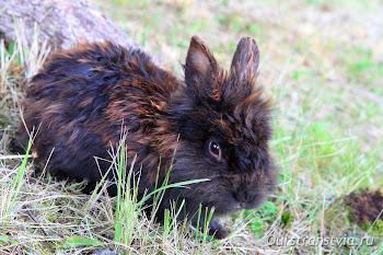 Кролики в Денхоффе