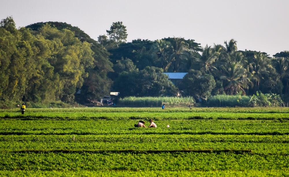 farmers working in green fields near hpa an.jpg