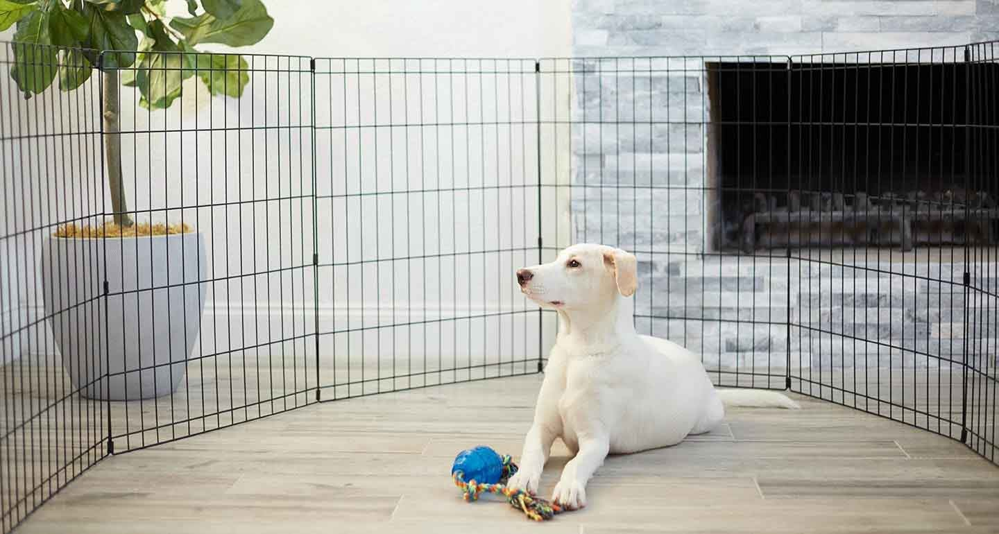 Best ways to house train a dog - Establishing a routine to train a dog