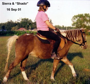 Sierra riding Shado english at LP Painted Ponys - Parkton, NC - 2001