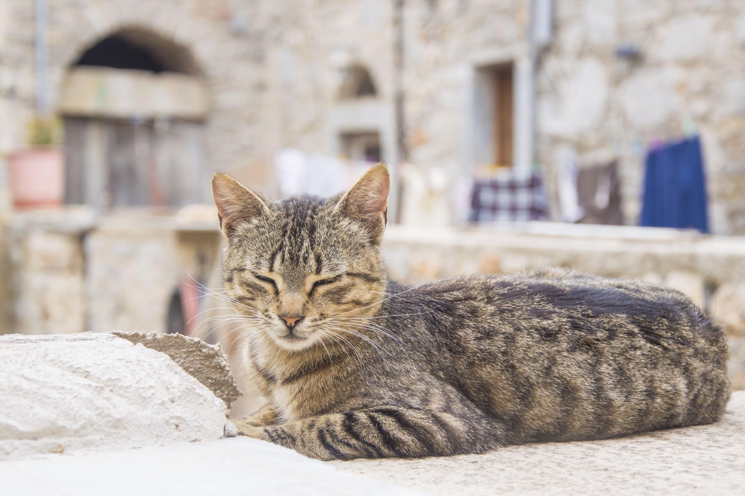 Griekenland-coronatest