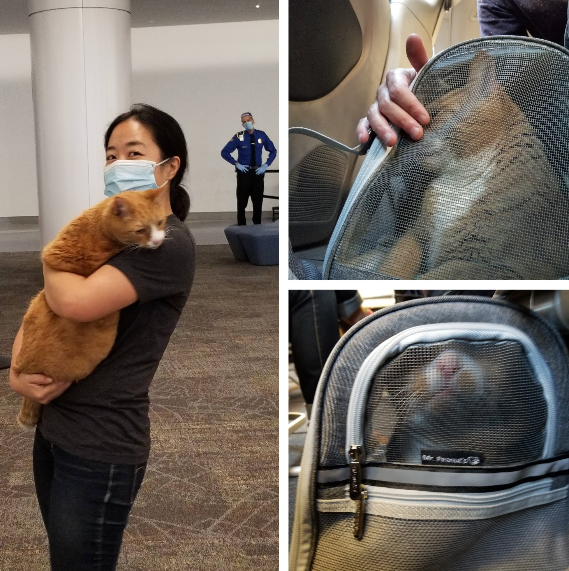 Flying with a cat through SFO