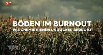 Bild aus Video, Vorspann: Maisfeld. «Böden im Burnout. Wie Chemie Bienen und Äcker bedroht. Wissen hoch 2.»