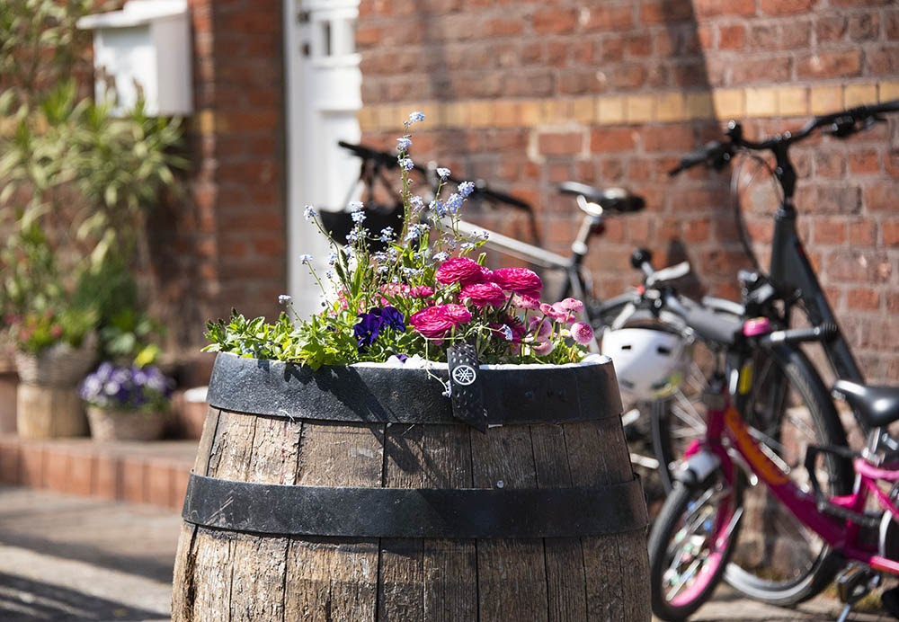Цветы у входа в дом, рабочий поселок Германиа
