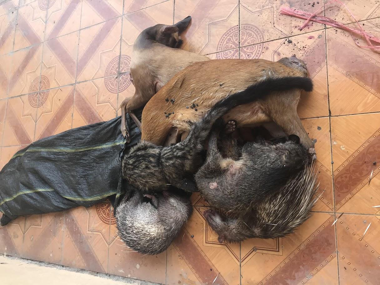 Lô hàng mỹ phẩm và động vật hoang dã bị phát hiện, thu giữ