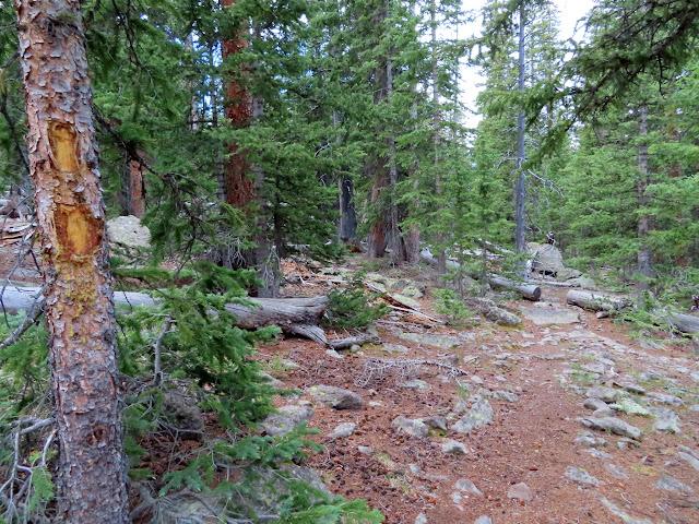 Blazed tree along the Donkey Meadows Trail