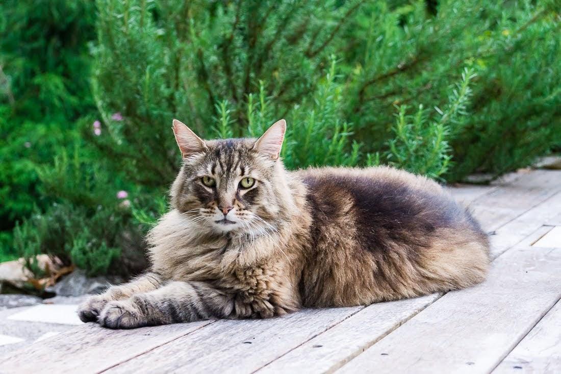 Садовое котоводство
